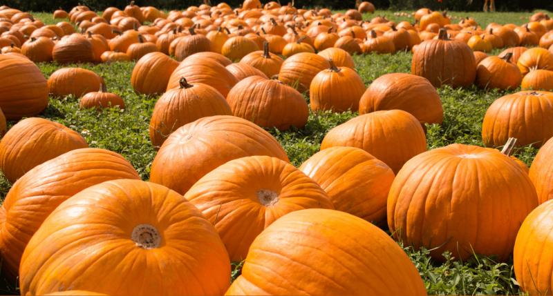 pumpkin picking new jersey