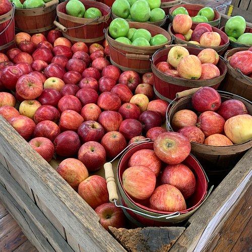 apple picking GA