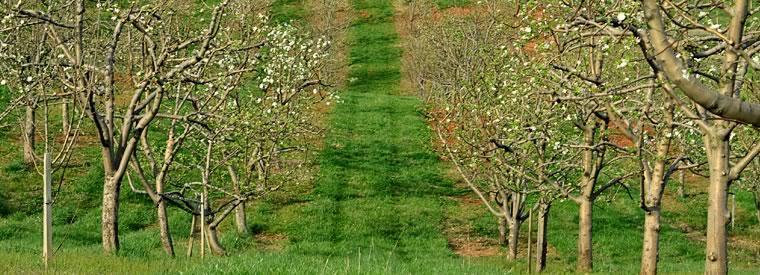 pick your own apples VA