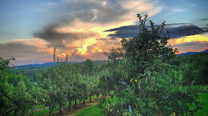 pick your own apples georgia