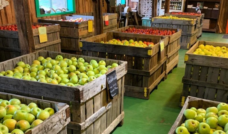 best apple picking va
