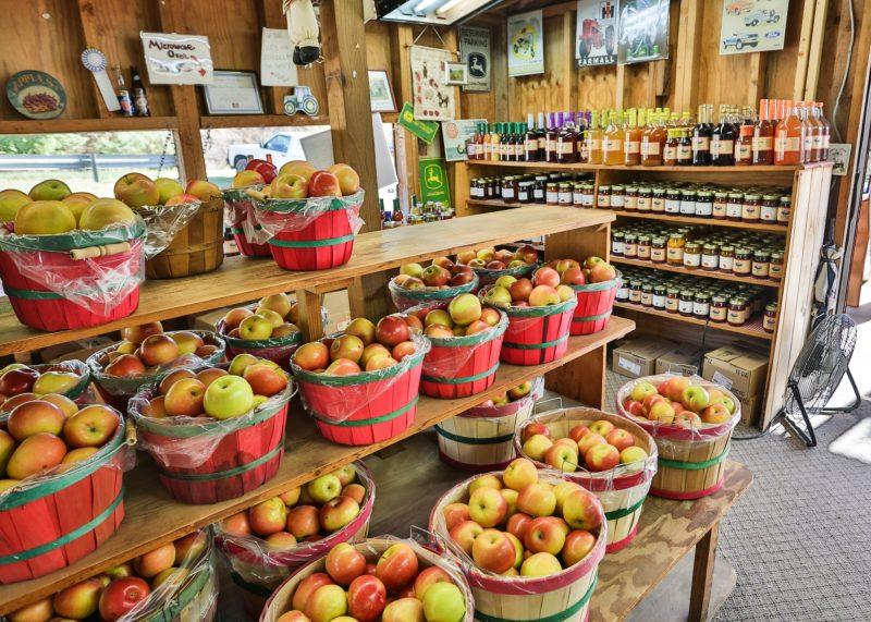 best apple picking in Georgia GA