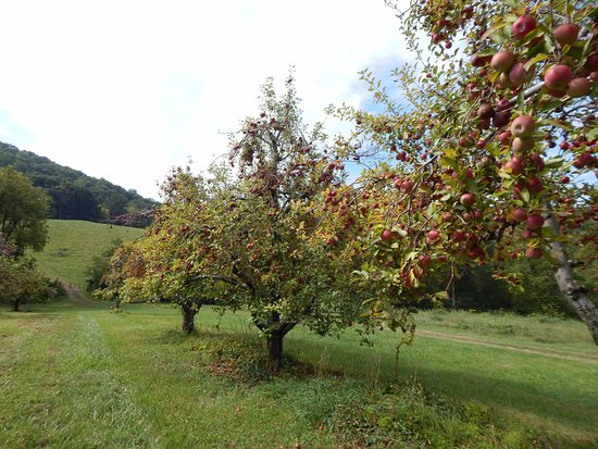 pick your own apples Virginia