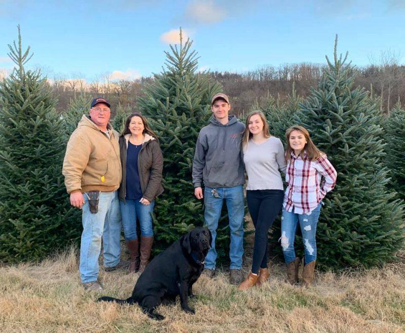 cut your own Christmas tree farms NJ
