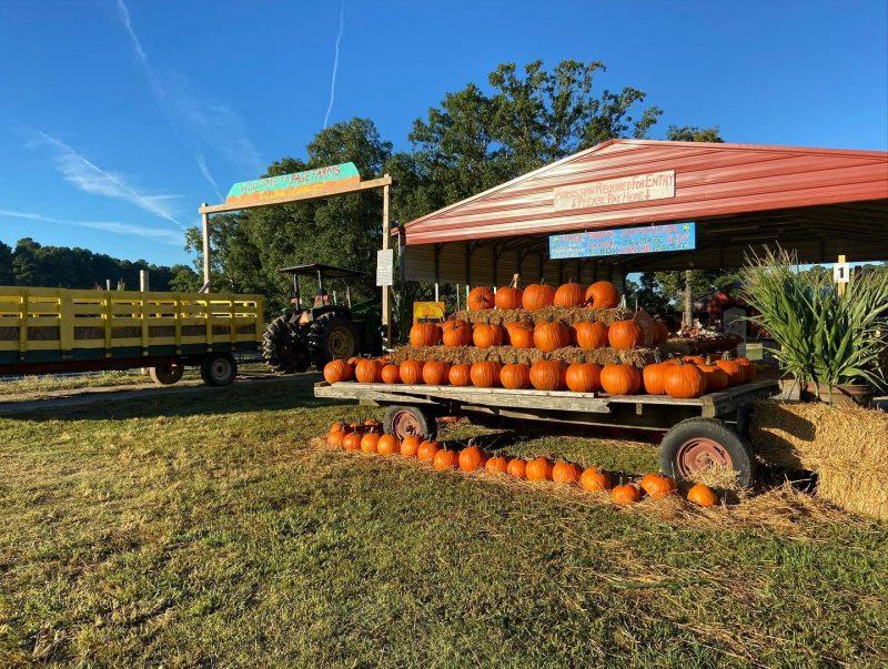 pumpkin patches NC