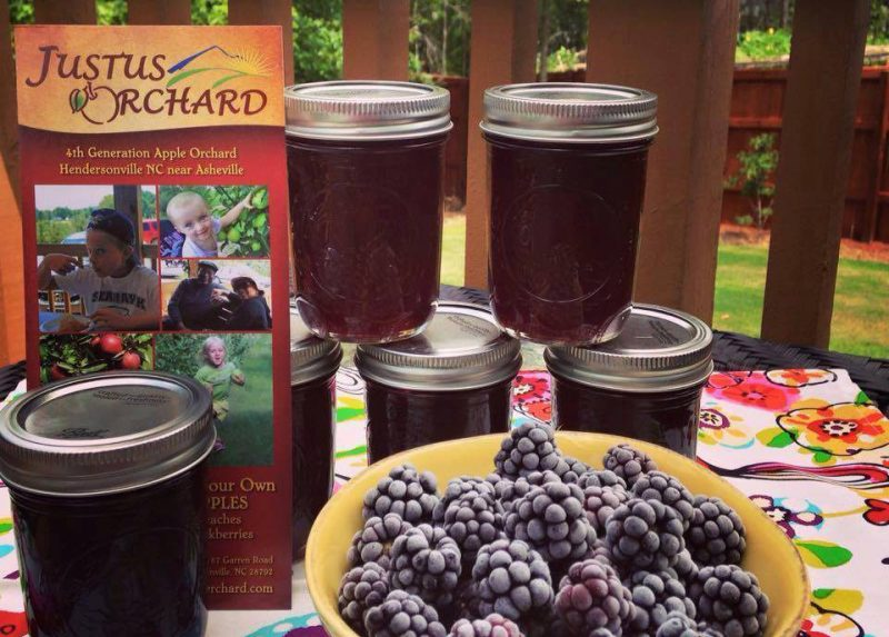 u pick blackberries nc